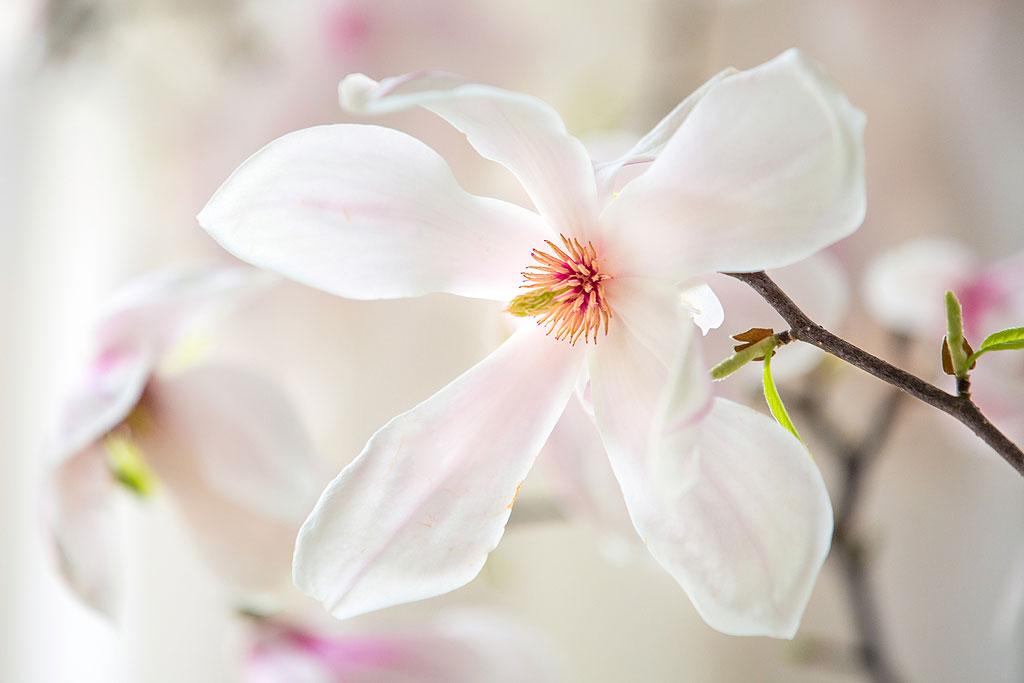 fotos-arztpraxis-magnolie-1