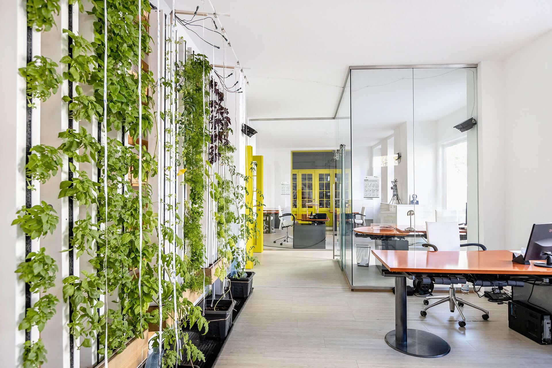 Coworking-Berlin-Charlottenburg-hydroponik-im-buero